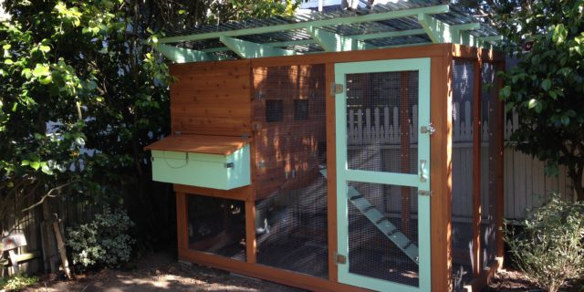 The Coop is Finished!