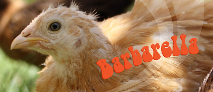 Name that Chicken: Barbarella
