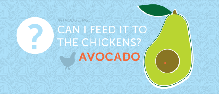 Avocado: Can I Feed it to the Chickens?
