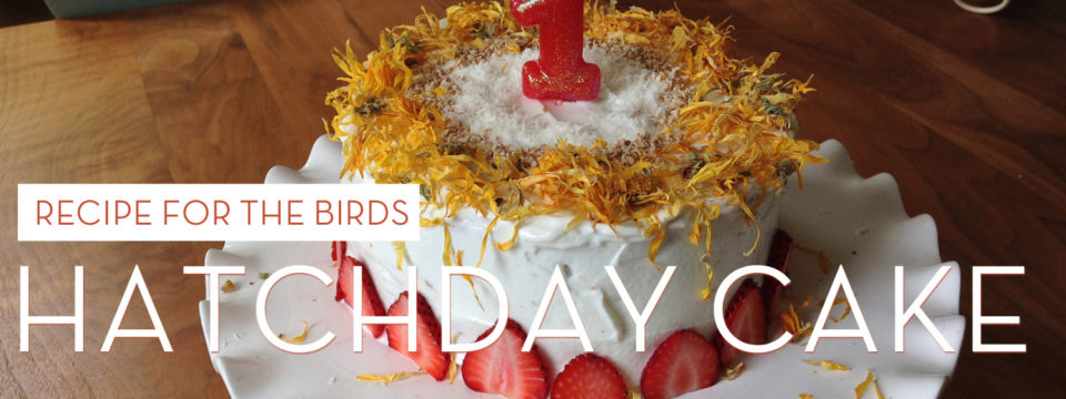 Recipe for the Birds: Hatchday Cake